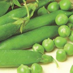 Sabre Green Peas