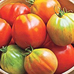 Nonna's Prize (VFF) Hybrid Tomato