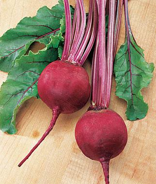 Beet, Chicago Red Hybrid
