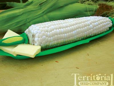 Sugarpearl Corn Organic