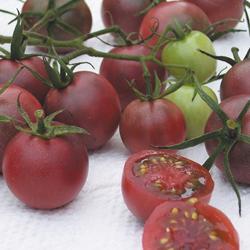 Tomato Black Cherry (Cordon)
