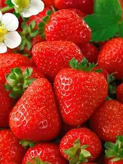 Seascape Everbearer Strawberry Plants - 10 root divisions