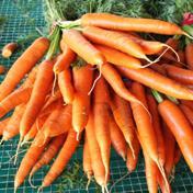 Garden Carrot Mix