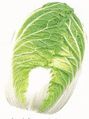 Matsushima Chinese Cabbage