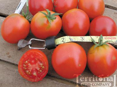 Northern Delight  Tomato Conventional & Organic