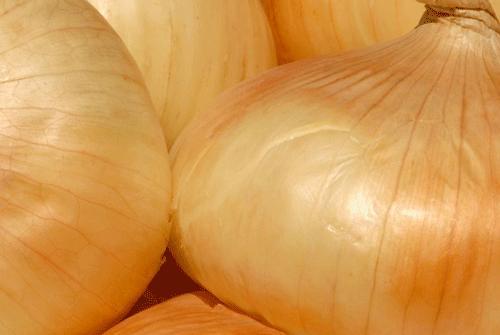 Onion, Walla Walla, Bulb