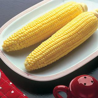 Corn Bodacious Hybrid