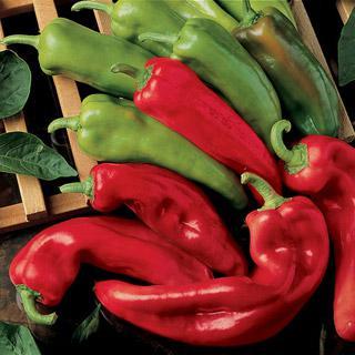 Pepper Corno di Toro