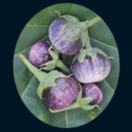 Lao Purple Stripe Eggplant