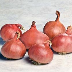 Prisma Hybrid Shallot Onion