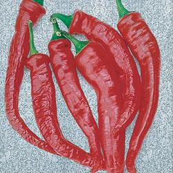 Cayenne Thick Hot Pepper