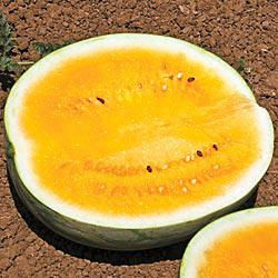 Orange Krush Hybrid Watermelon