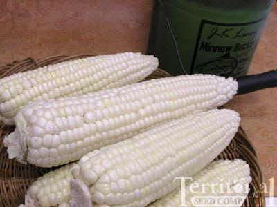Stowell's Evergreen Corn Organic