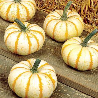 Pumpkin Lil' Pumpkemon