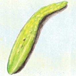 Long De Chine Cucumber