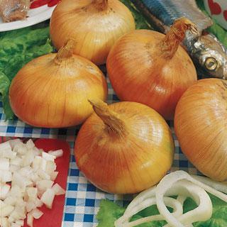 Onion Walla Walla Sweet