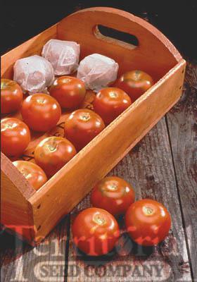 Longkeeper Tomato Organic