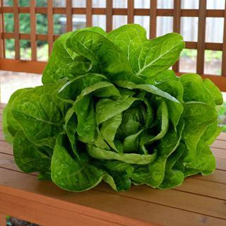 Lettuce Jericho