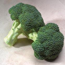 Gypsy Hybrid Broccoli