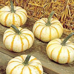 Lil' Pump-ke-mon Hybrid Pumpkin