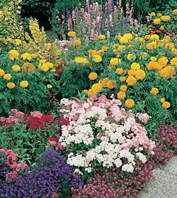 Flowers for Potpourri Seed mix  Bulk Seed - 1 pound