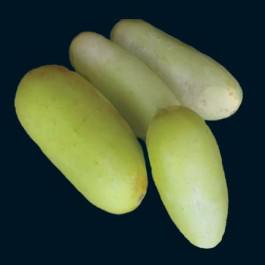 Poona Kheera Cucumber