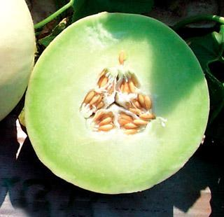 Honeydew Melon Snow Mass