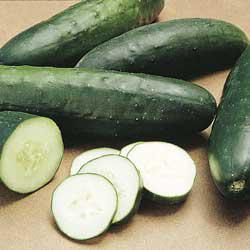Straight Eight Slicing Cucumber