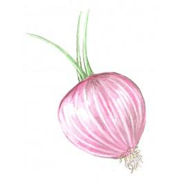 Bronze D' Amposta Onion