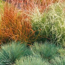 Grasses Color Grass Collection