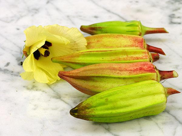 Hill Country Heirloom Red Okra