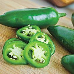 Gurney's Primo Jalapeño Hybrid Hot Pepper