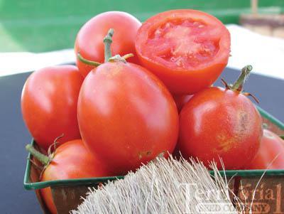 Beaverlodge 6806 Plum Tomato Organic