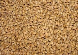 Barley (Hayes 2-row Awnless Malting)
