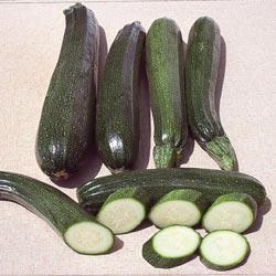 Black Zucchini Summer Squash