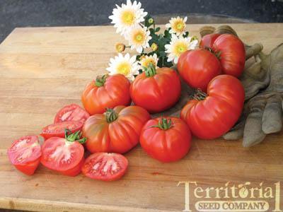 Grandma's Pick Tomato