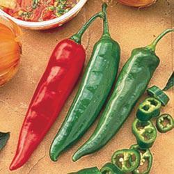 Garden Salsa Hybrid Hot Pepper