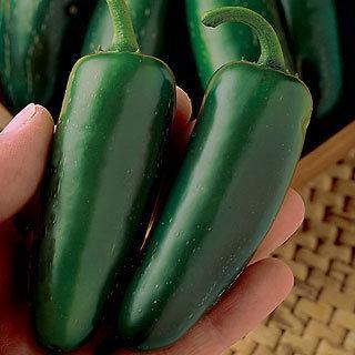 Pepper Mucho Nacho Hybrid