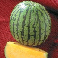 Yellow Doll Hybrid Watermelon