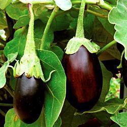 Eggplant Banka