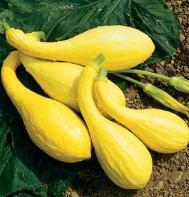 Yellow Crookneck (OG)