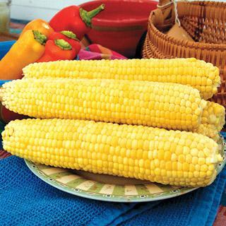 Corn Yellow Mirai 131Y