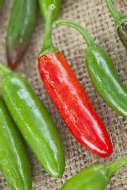 Pepper, Serrano