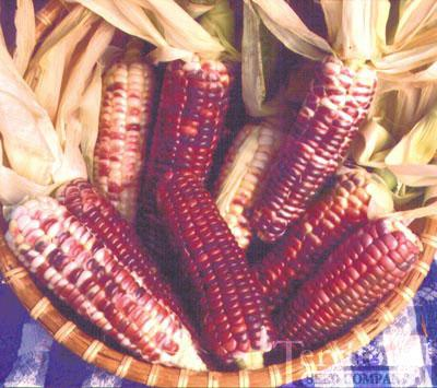 Hooker's Sweet Indian Corn Organic