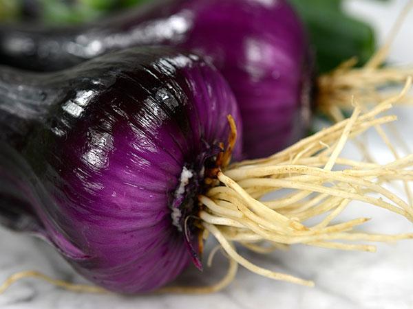 Noordhollandse Bloedrode Onion