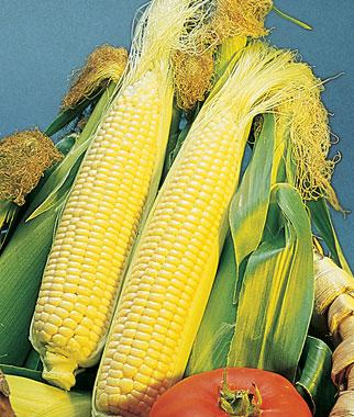 Corn, Golden Bantam Organic