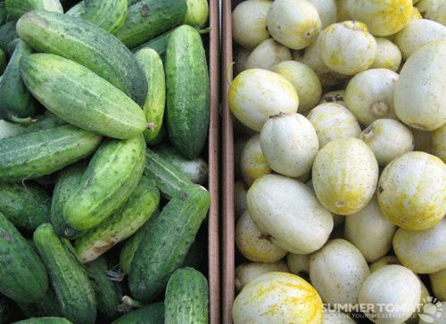 Cucumber Mix