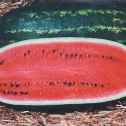 Henry Field's Sweet Cheer Hybrid Watermelon
