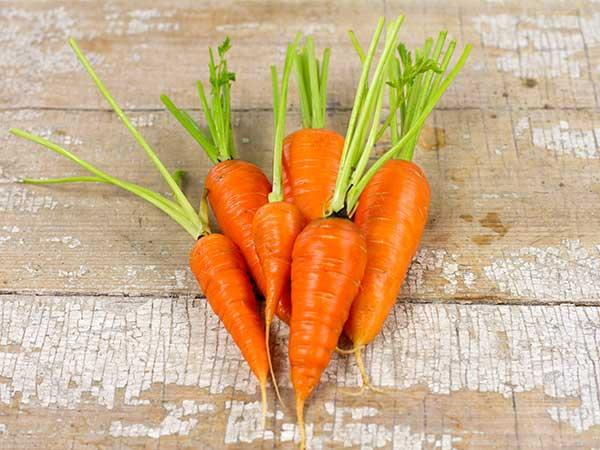 Chantenay Red Core Carrot