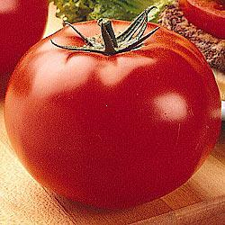Big Beef (VFFNT) Hybrid Tomato